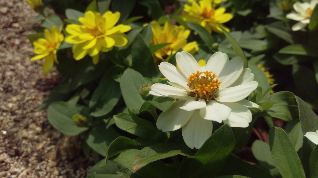 b3_flower